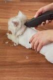 Кот получая стрижку, женские руки Стоковая Фотография