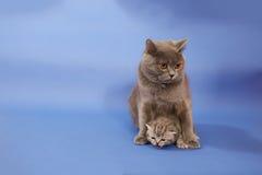 Кот прижимаясь ее малый младенец Стоковая Фотография