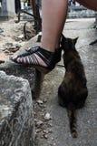 Кот прижимаясь Стоковые Изображения RF