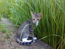 Кот приключения Стоковая Фотография RF