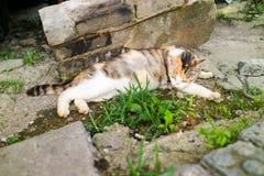 Кот принимает ворсину Стоковые Фотографии RF