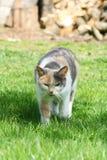 Кот принимает прогулку на траве стоковое фото rf