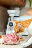 Кот принимает часть мяса от таблицы стоковые изображения rf