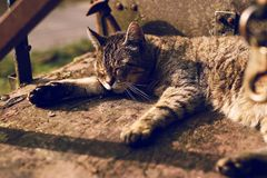 Кот принимая ворсину на солнечном afternnon стоковое изображение