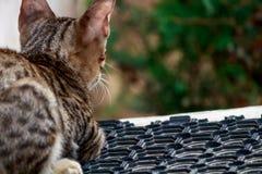 Кот принимая остатки Стоковые Фото