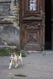 Кот приходя из двери старого дома Стоковые Изображения