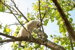 Кот пробует сдержать ветвь дерева стоковые фото