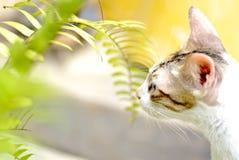Кот проверяя листья папоротника Стоковое Изображение RF