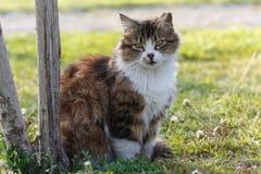 Кот против зеленой предпосылки Стоковые Изображения RF