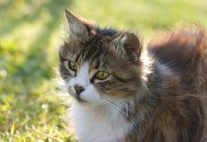 Кот против зеленой предпосылки Стоковое Изображение RF