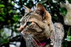 Кот профиля Стоковая Фотография