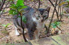 Кот пряча в кустах Стоковые Фото