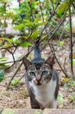 Кот пряча в кустах Стоковое Изображение