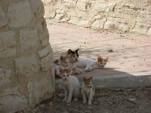 Кот пряча в тенях на набережной в Лимасоле Стоковые Фотографии RF