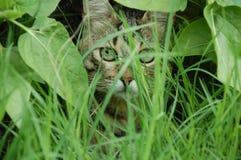 Кот пряча в траве ang листьев стоковое изображение rf