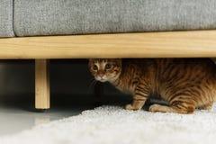 Кот пряча под креслом стоковые изображения rf