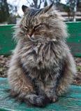 кот пушистый Стоковые Изображения RF