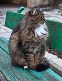кот пушистый Стоковая Фотография RF