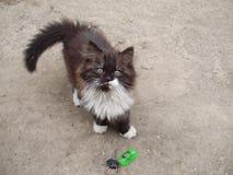 кот пушистый Стоковое фото RF