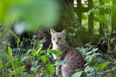 Кот пятнистый Стоковое фото RF