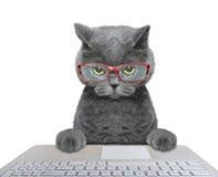 Кот работая на компьютере Стоковые Фото