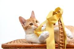Кот развязывая желтой ленте на корзине стоковое фото rf