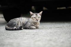 Кот рассеянного tabby милый стоковое фото rf