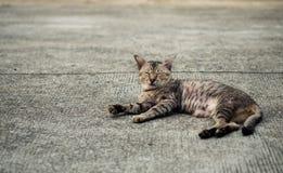 Кот рассеянного tabby милый стоковая фотография rf