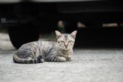 Кот рассеянного tabby милый стоковые фотографии rf
