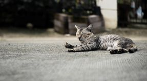 Кот рассеянного tabby милый стоковые фото