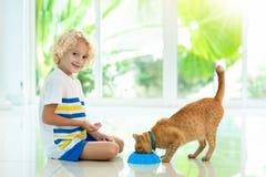 Кот ребенка питаясь домашний Дети и любимчики стоковое фото