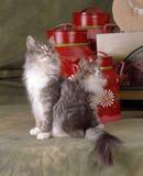 Кот древесины Norvegian Стоковые Изображения RF