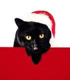 Кот рождества в шляпе и Красном знамени Санты Стоковая Фотография RF