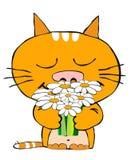 кот романтичный Стоковые Фотографии RF