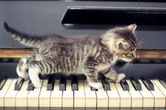 Кот рояля Музыкант, музыка Стоковая Фотография RF