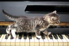 Кот рояля Музыкант, музыка Стоковые Фото