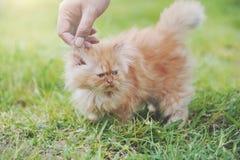 Кот руки касающий Стоковые Изображения