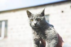 Кот руки человека стоковое изображение