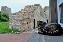 Кот рядом с рассказом Стоковое Изображение RF