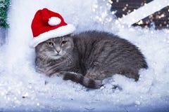 Кот Санты в шляпе Санты Стоковые Фотографии RF