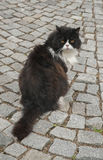Кот сада Стоковое фото RF