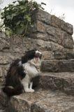 Кот сада Стоковые Фотографии RF