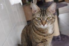 кот сварливый Стоковое фото RF