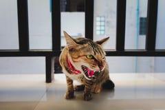 Кот сердитый стоковая фотография rf