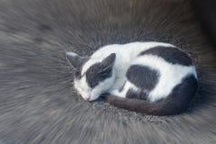 Кот серой белизны спать на конце-вверх мостоваой стоковые изображения