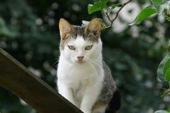 Кот серой белизны стоит на доске около ветви с зелеными листьями Стоковая Фотография RF
