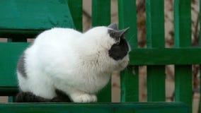 Кот серы улицы белый сидя на стенде внутри видеоматериал