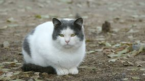 Кот серы улицы белый сидя на стенде внутри сток-видео