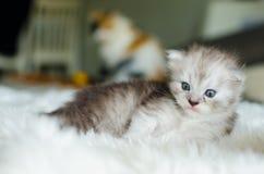 Кот, селективный фокус Стоковое фото RF