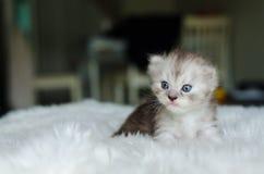 Кот, селективный фокус Стоковое Изображение